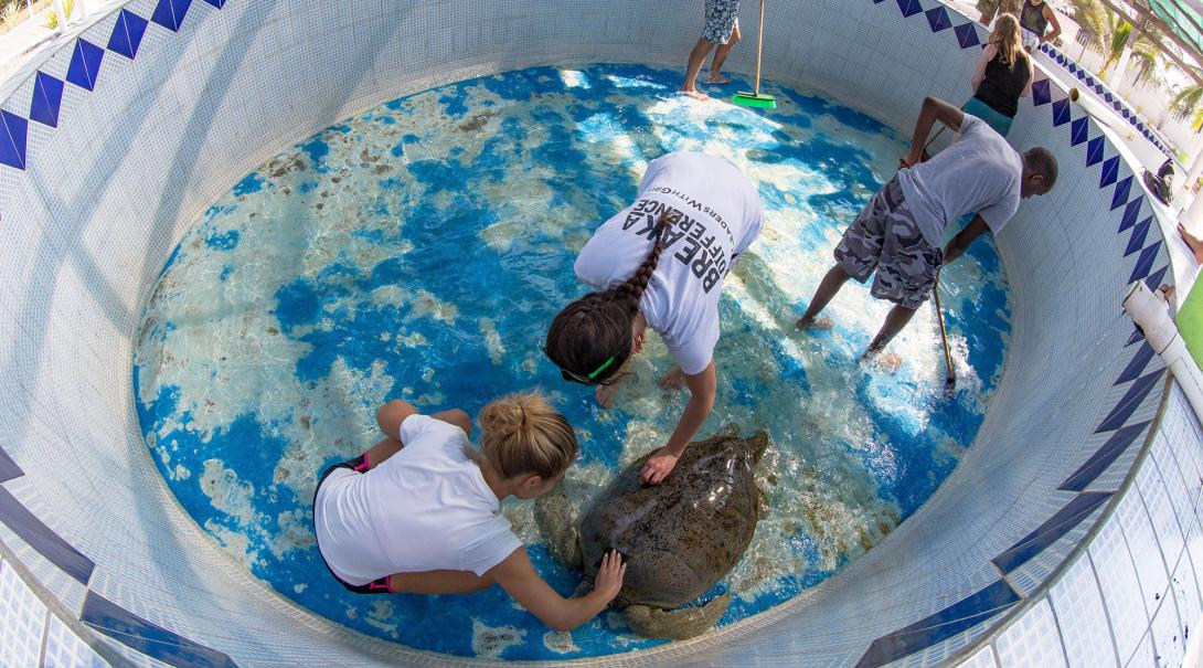 Projects Abroad Conservation volunteers in Mexico team up to clean a turtle and its tank.